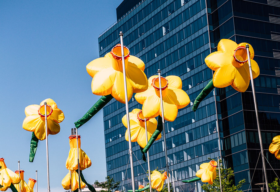 20 Knots: Daffodils For Boston