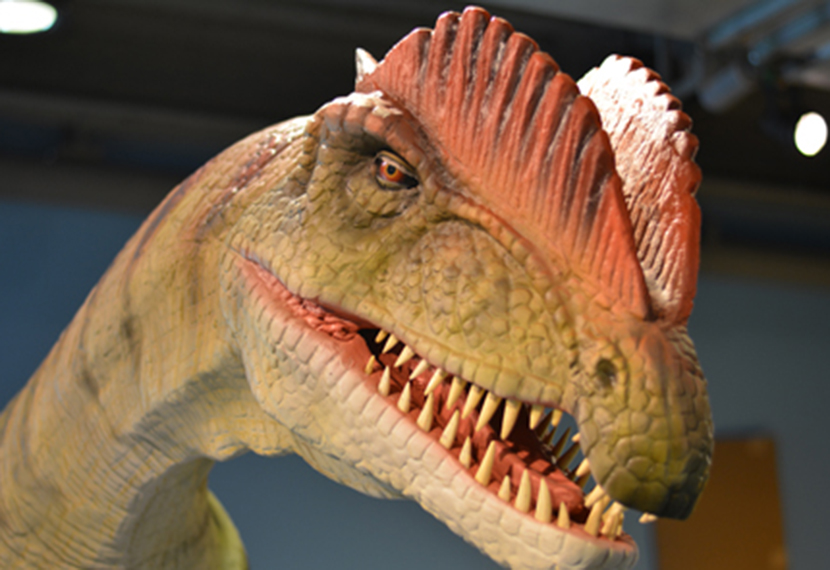 Boston Children's Museum invites you to Explore•a•Saurus